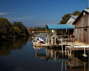 Backwater Cedar Key