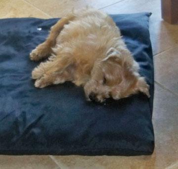 lancer napping