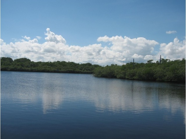 6384545-loxahatchee_river_Jonathan_Dickinson_State_Park