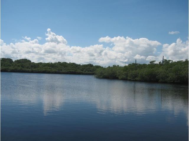 6384545-loxahatchee_river_Jonathan_Dickinson_State_Park