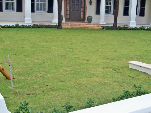 Special grass