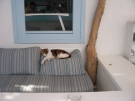 Mykonos  Cat nap
