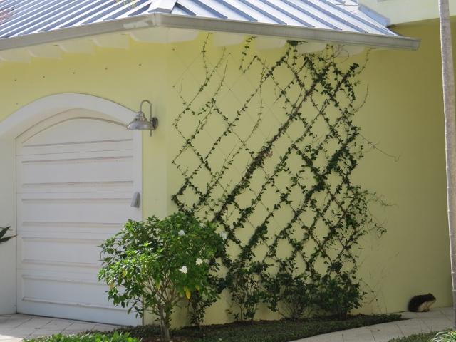 Wall plantings