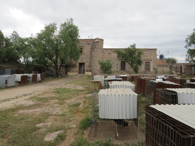 Hacienda and Chicken coops