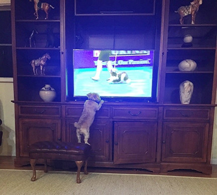 Watching the National dog Show
