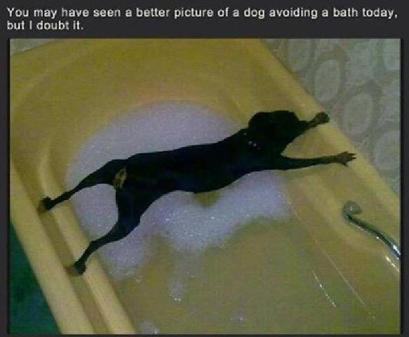 Avoiding a bath today